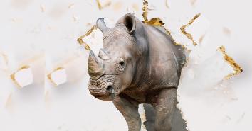 Rhinoprime vernieuwd! Stiho